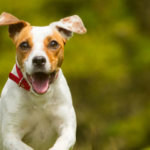 Special care on Your Lovely Pets by Veterinary physician