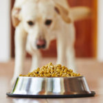 The Need of Experts Guidance on Pet Nutrition and Health Care