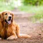 Regular Health Checkup for Field Working Pets